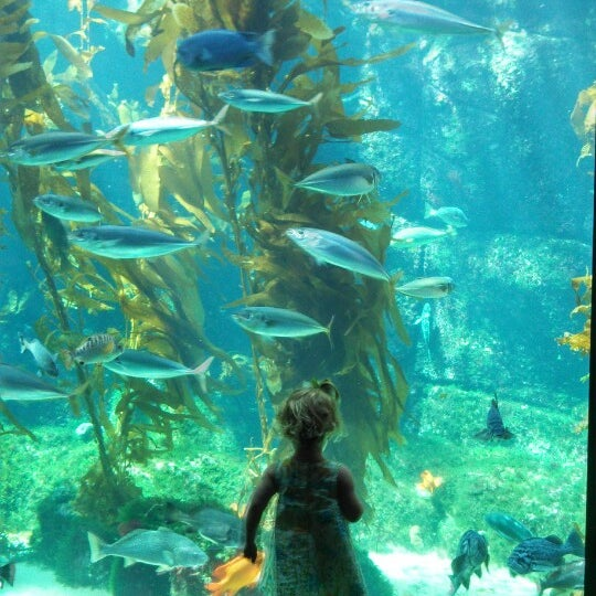 Birch Aquarium At Scripps Institution Of Oceanography La