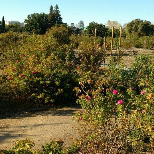 San Jose Heritage Rose Garden Garden In San Jose