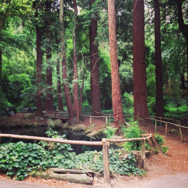 Photo taken at Sigmund Stern Grove by Matt S. on 7/14/2013
