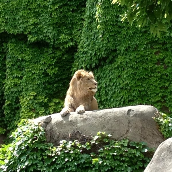 Photo taken at Lincoln Park Zoo by Kristin K. on 6/5/2013