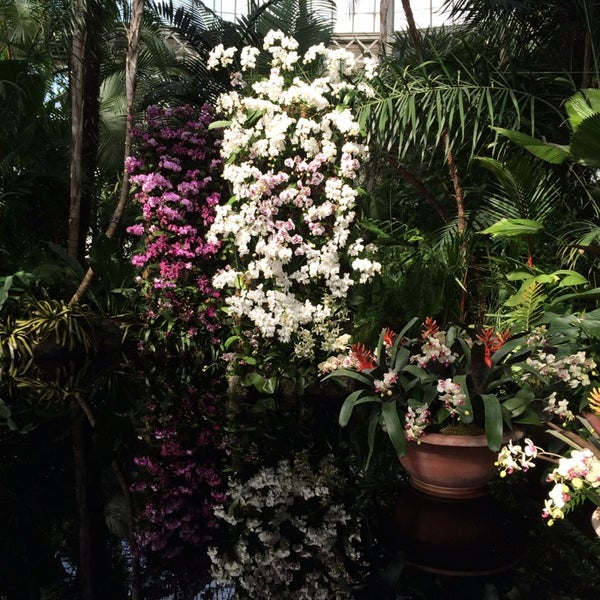 Photo taken at Enid A. Haupt Conservatory by Matt A. on 3/1/2014