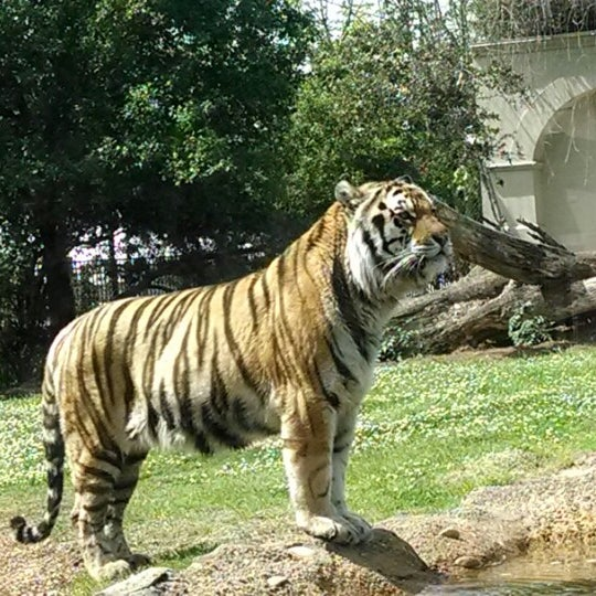 Photo taken at LSU - Mike's Habitat by Graceland F. on 4/16/2014