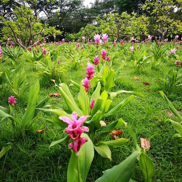 Photo taken at Queen Sirikit Park by Prapat C. on 8/24/2016