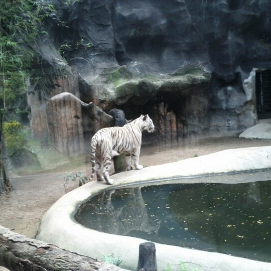 Photo taken at สวนสัตว์เปิดเขาเขียว (Khao Kheow Open Zoo) by Sergey K. on 2/10/2013
