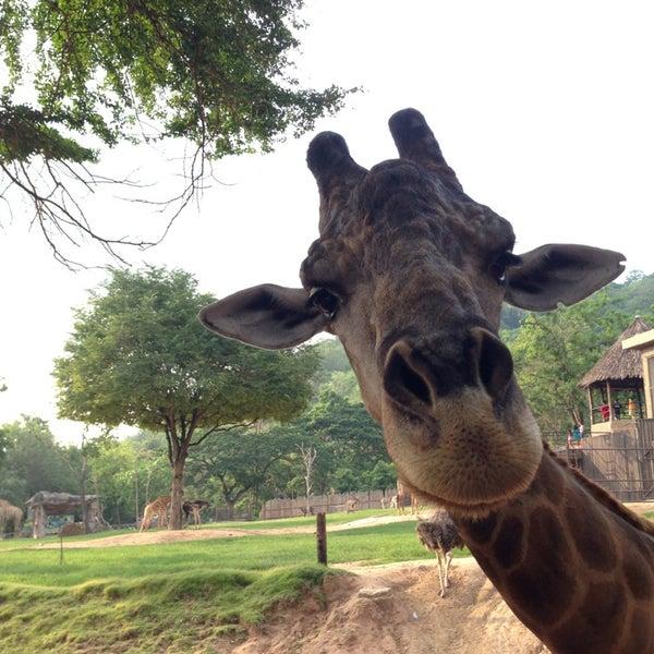 Photo taken at สวนสัตว์เปิดเขาเขียว (Khao Kheow Open Zoo) by Por K. on 4/21/2013