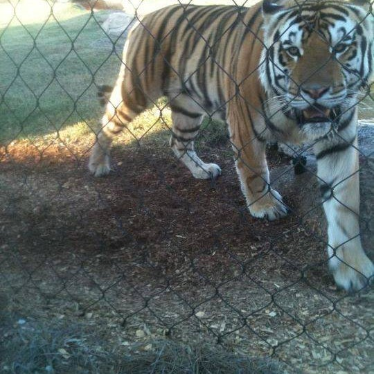 Photo taken at LSU - Mike's Habitat by Kenny N. on 10/7/2011