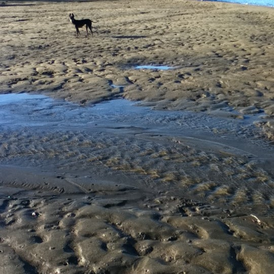 Nudgee Off Leash Dog Beach Address