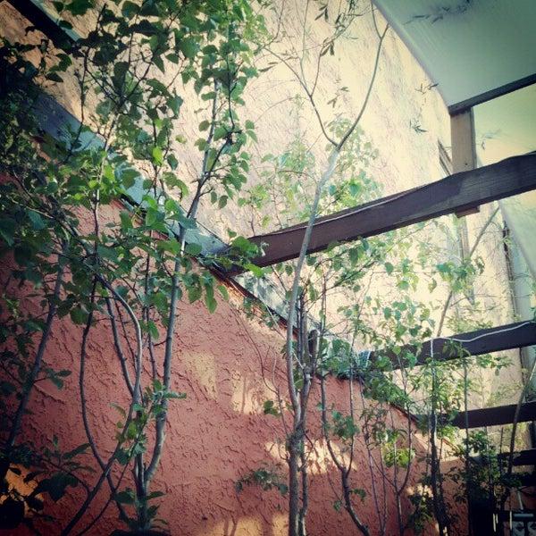 Adobe cafe manayunk / Garden ridge sugar land texas