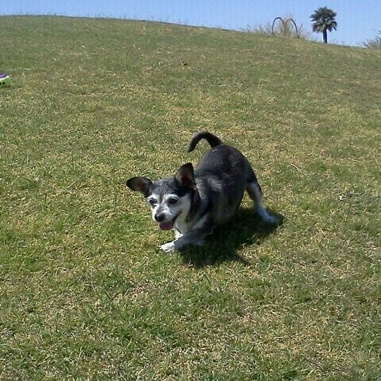 Steele Indian School Park Dog Park