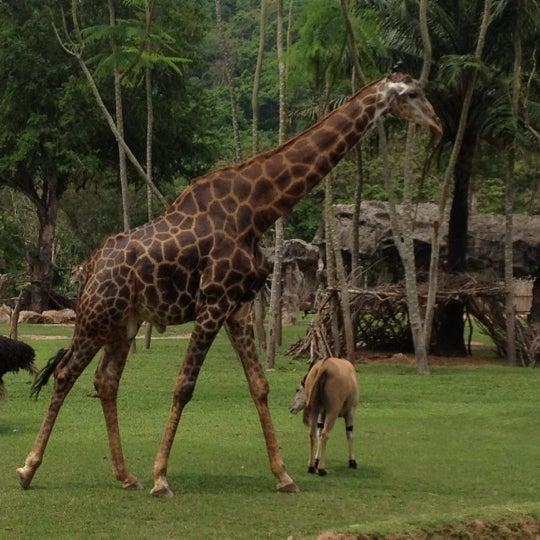 Photo taken at สวนสัตว์เปิดเขาเขียว (Khao Kheow Open Zoo) by Rattasak K. on 3/11/2012