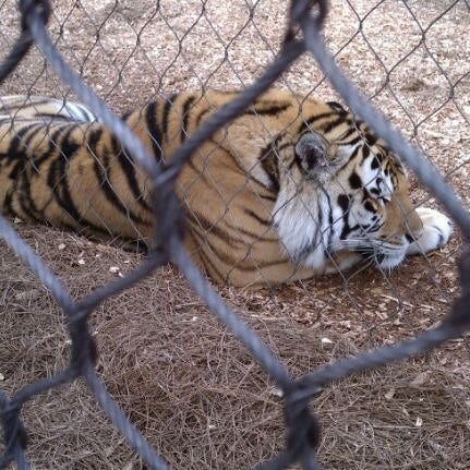 Photo taken at LSU - Mike's Habitat by Theresa O. on 12/24/2011