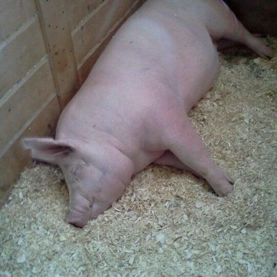 Photo taken at Swine Barn by Austin d. on 8/25/2011