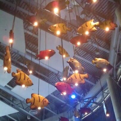 Denver Downtown Aquarium Restaurant Seafood Restaurant