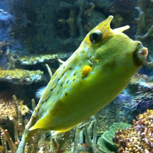 Photo taken at National Aquarium by Chris F. on 6/10/2012