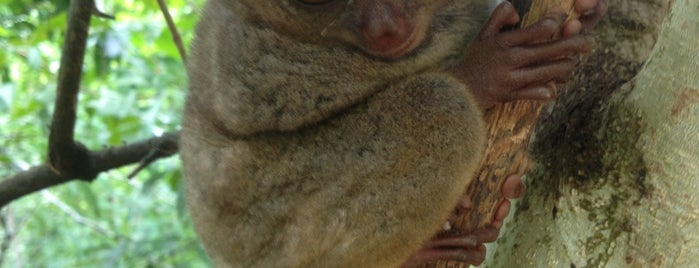 Tarsier Conservation Area is one of Places I've been to....
