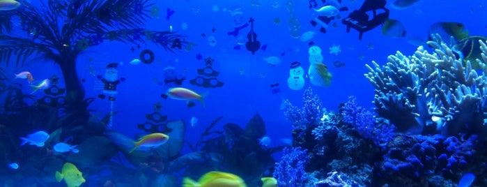 横浜・八景島シーパラダイス (Sea Paradise) is one of Favorite Arts & Entertainment.
