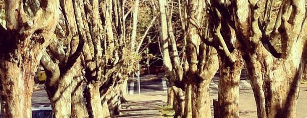 Parque dos Macaquinhos is one of Best places in Caxias do Sul,RS, Brasil.