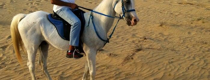 Bab Al Shams Desert Resort & Spa is one of Nogdalla's Tips.