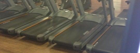 F.Scherer Fitness is one of Beiramar Shopping.