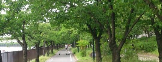 毛馬桜之宮公園 is one of 大阪に帰省したら必ず行く店.