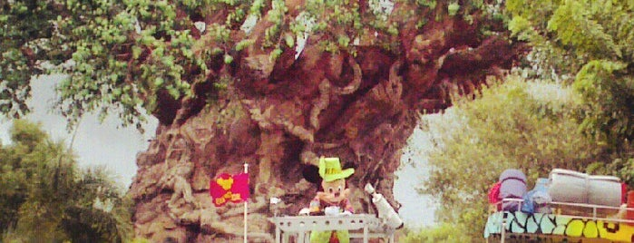 Disney's Animal Kingdom is one of Orlando's must visit!.