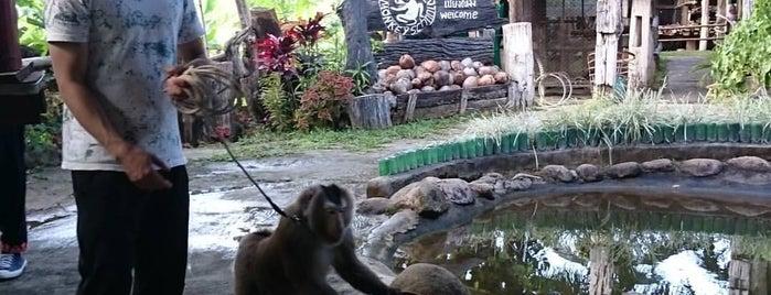 Monkey School Chiang Mai is one of Chiang Mai.