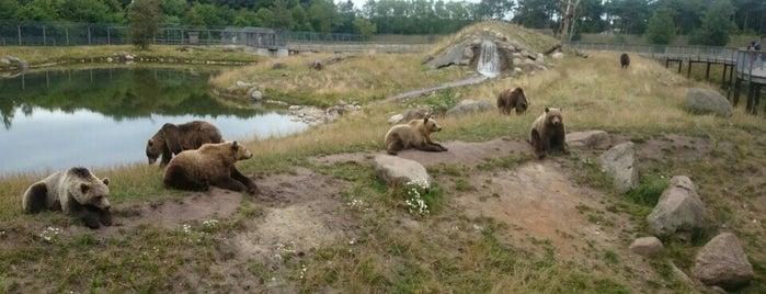 zoo billund Thai massage midtjylland