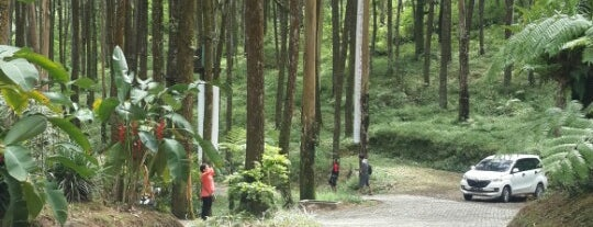 Kopeng Treetop Adventure Park is one of Must-visit Great Place in Ambarawa-Salatiga.