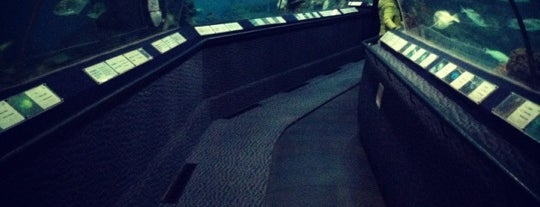 Shanghai Ocean Aquarium is one of Welcome to Shanghai!.