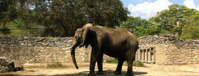 Parque Zoológico Caricuao is one of Plazas, Parques, Zoologicos Y Algo Mas.
