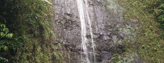 Mānoa Falls is one of Do it!!!.