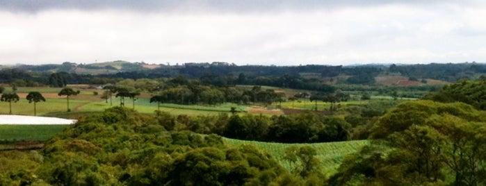 São José dos Pinhais is one of Paraná.