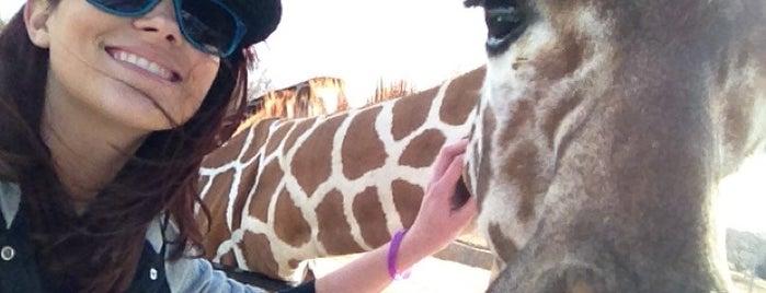 Tanganyika Wildlife Park is one of Wichita Must-Do's!!.