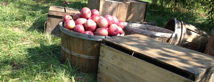 Hamilton Orchards is one of Western Mass Faves.