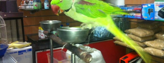 Pet Master is one of Check PetShops new stock.