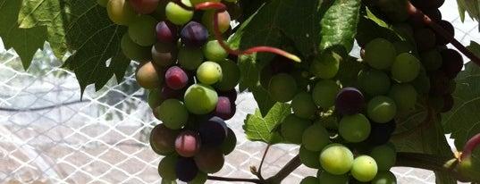 Belle Joli Vineyard is one of South Dakota Winery & Vinyards.