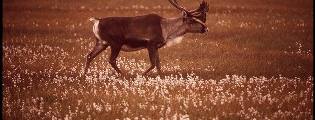 Northern Tip of Alaska is one of Documerica.