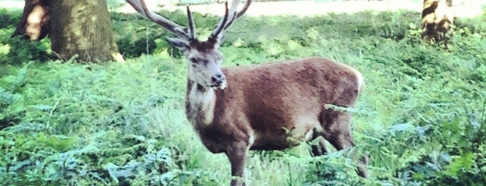 Richmond Park is one of Must-visit Great Outdoors in London.