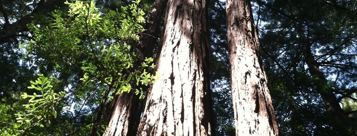 Muir Woods National Monument is one of Gary's List.