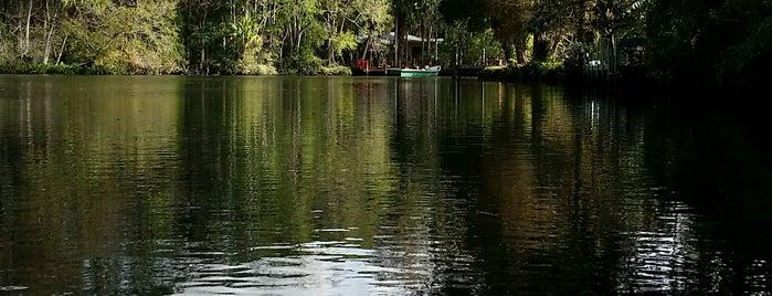 Homosassa River is one of Spring Break 2012.