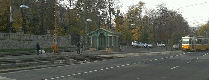 Budagyöngye (56, 56A, 59B, 61) is one of Budai villamosmegállók.