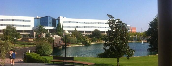 Universidad Europea de Madrid (UEM) is one of Tania.