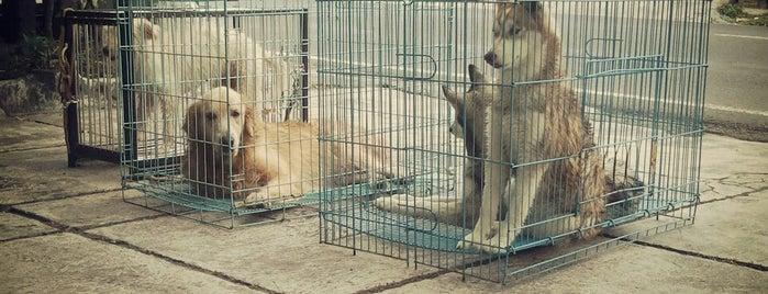 Nurani Clinic & Pet Shop is one of Pet Shop.