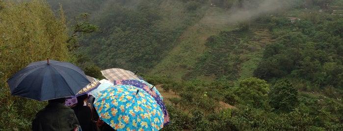 木柵貓空茶園 Muzha is one of Top picks for Brunch Spots.
