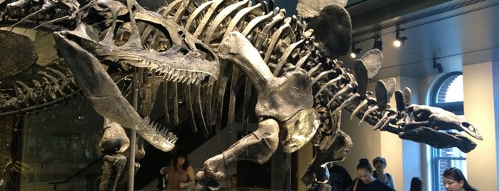 Nys Natural History Museum