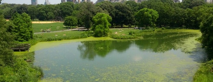 Central Park is one of 36 hours in... New York.