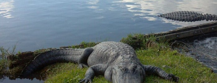 Gatorland is one of Florida!.