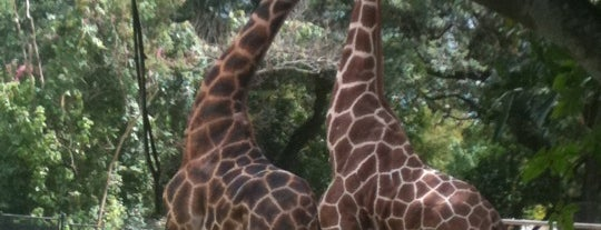 Audubon Zoo is one of Best Places to Check out in United States Pt 2.