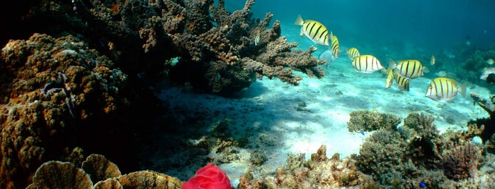 Mesoamerican Reef is one of MARTI facts.