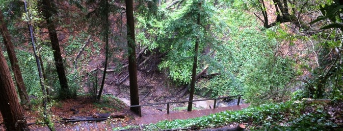Tamalpais Path is one of UC Berkeley Gems.